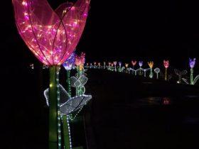 Phoenix_Lantern Festival_4