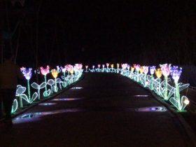 Phoenix_Lantern Festival_6