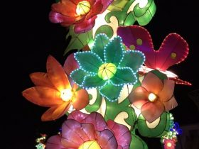 Phoenix_Lantern Festival_1