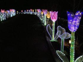 Phoenix_Lantern Festival_7