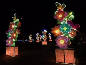Phoenix_Lantern Festival_8